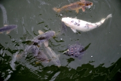 Fishes and Turtles