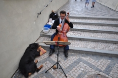 Musican on the steps to the Prague Castle