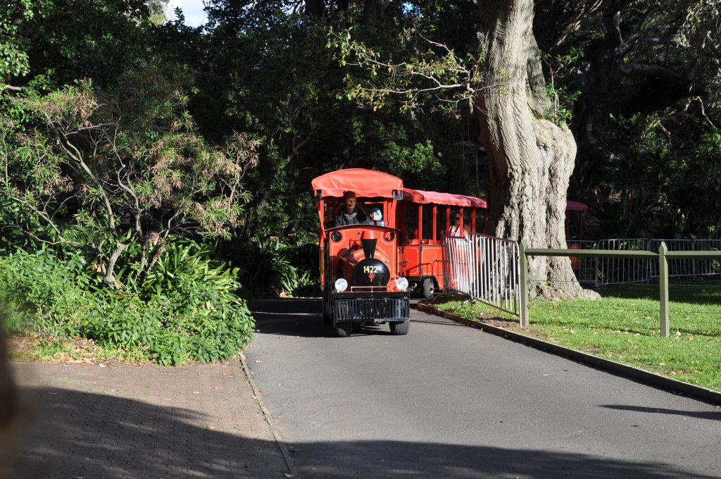 Train in the park in Sydney