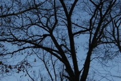 The Trees 2
